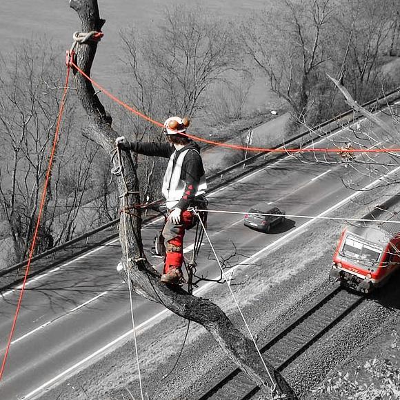 nextlevel - Baum & Baumfällung - Bild 2