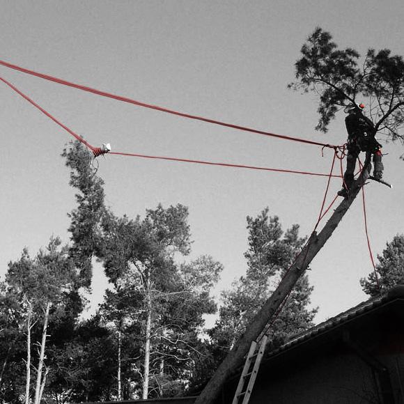 nextlevel - Baum & Baumfällung - Bild 3