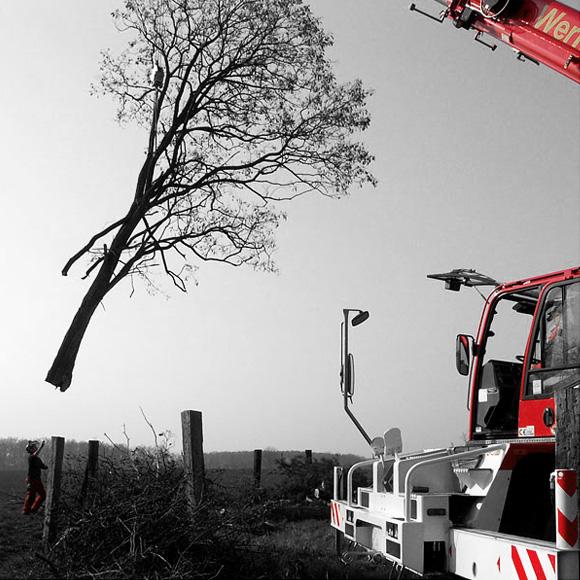 nextlevel - Baum & Baumfällung - Bild 4